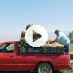 2020_05 Agricultura Familiar Campesina VIDEO THUMNAIL